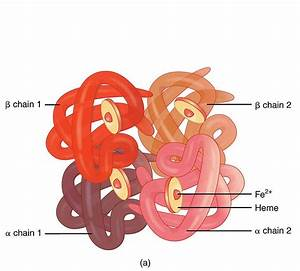 Difference Between Iron And Hemoglobin