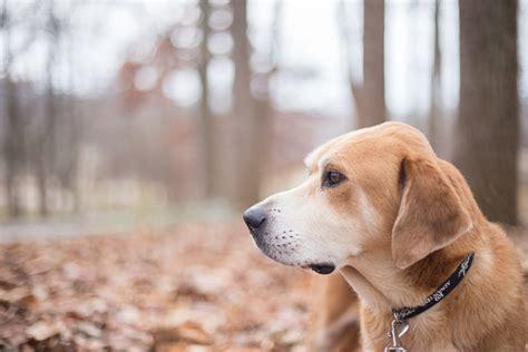 adopt levi daily dog tag