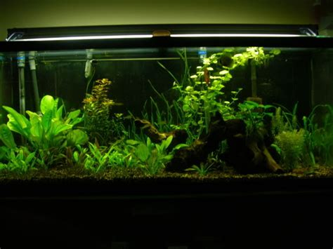 would black gravel go with brown substrate help 50617