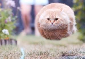 fast cat cats like a speeding bullet