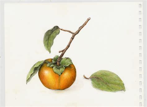 fruits vegetables gallery full botanical artist