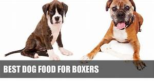 17 best images about boxer health nutrition on pinterest With best dog food for boxers