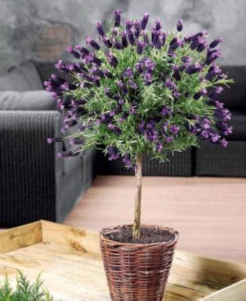 plante en pot pour terrasse balcon plante d ext 233 rieur