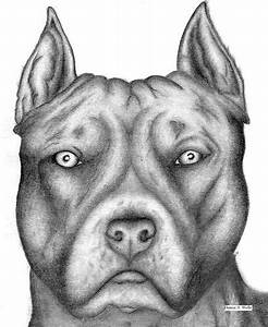 Pit Bull Drawing by Denise A. Wells | Pencil Drawings by ...