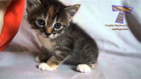 mali macici mijaukati  govori slatka macka kompilacija