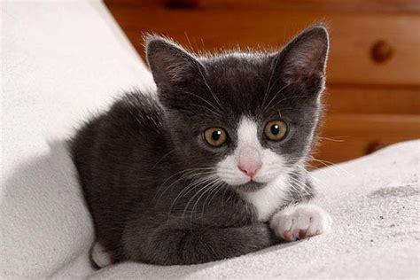 kitten kaufen tipps und suesse fotos