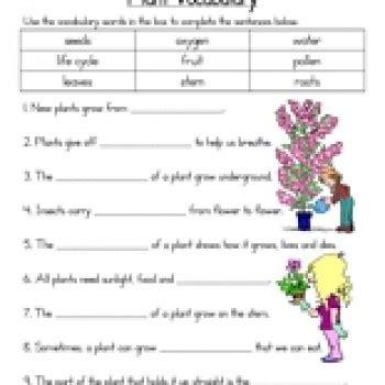 Plants Worksheets Plant Vocabulary Worksheet Teaching