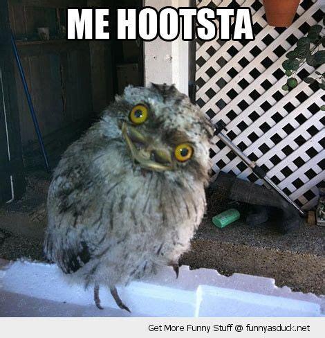 Funny Owl Meme - 310 best funny memes images on pinterest funny memes memes humor and ouat funny memes