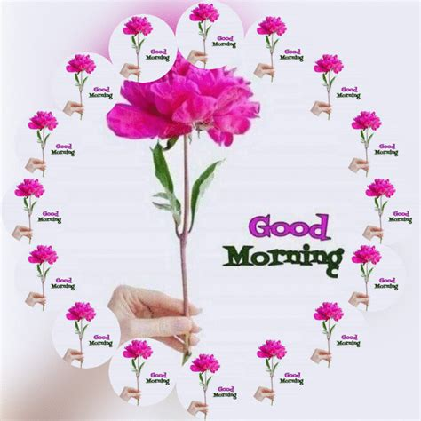 Download free good morning gifs, beautiful nature flower good morning animated gifs to share your morning wishes with others. Good Morning GIF Animation Images And Videos | More