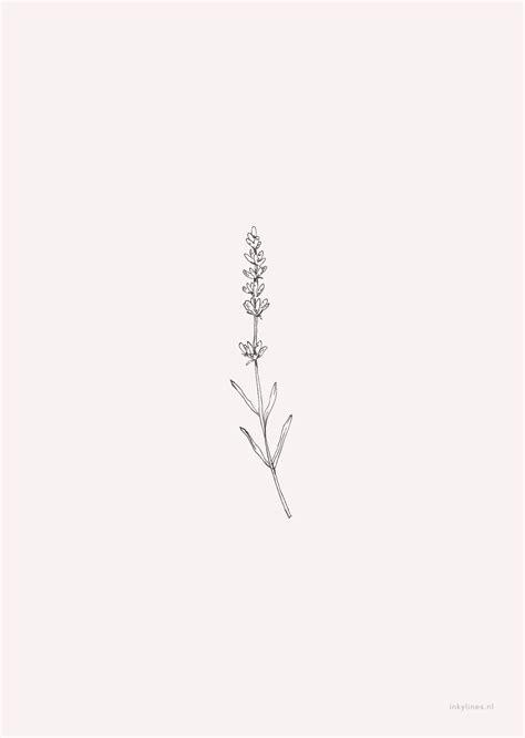 inkylines - Flowers - Lavender (pink)