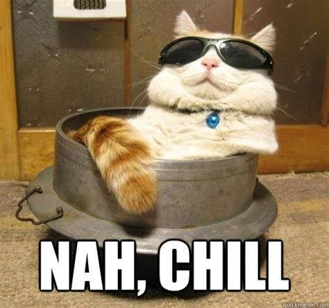 Chill Out Meme - chill cat memes quickmeme