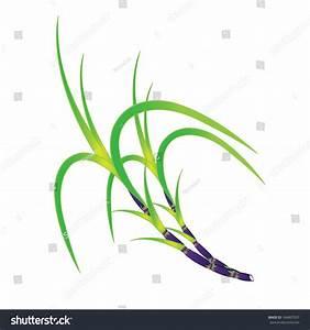 Plant Of Sugar Cane. Vector Illustration - 184807937 ...