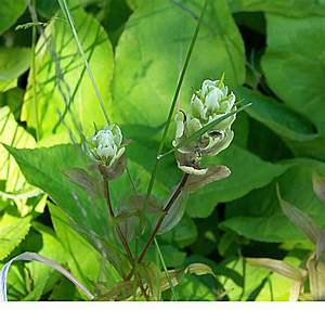 Identify Wildflowers From Isle Royale National Park ...