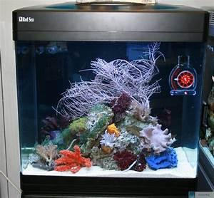 Aquarium Einrichten 60l : das nanoriff einrichtung und grundlagen ~ Michelbontemps.com Haus und Dekorationen