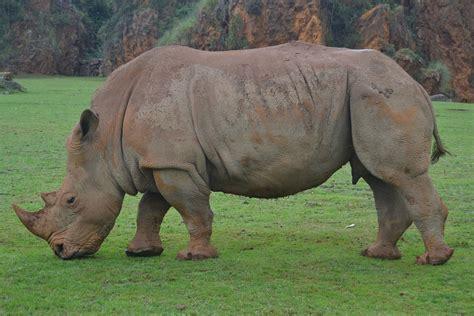 photo rhino animals africa safari  image
