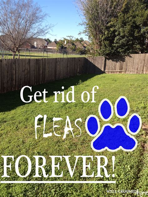 rid  fleas naturally  fleas fleas