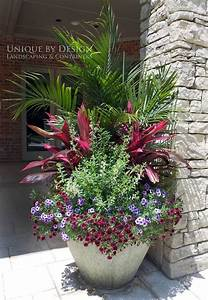 783 best images about Potted plants on Pinterest ...