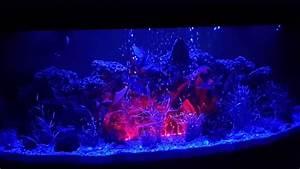 Aquarium Set Led : aquarium led light changing colour youtube ~ Watch28wear.com Haus und Dekorationen