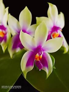 Rare Orchid Photographs Cebolla Fine Flowers