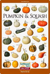 Pumpkin  U0026 Squash Varieties Chart
