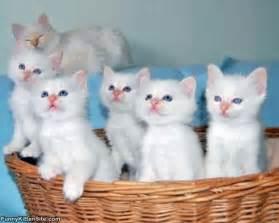Cute Baby White Kittens