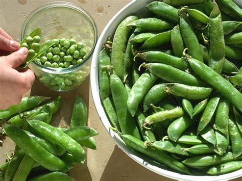 cuisiner les petit pois frais cuisiner et conserver les petits pois frais