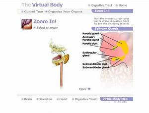 The 6 Best Virtual Tours Of The Human Body For Interactive