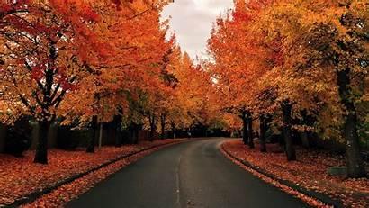 Road Tree Autumn Lined Fall Spotlight Windows