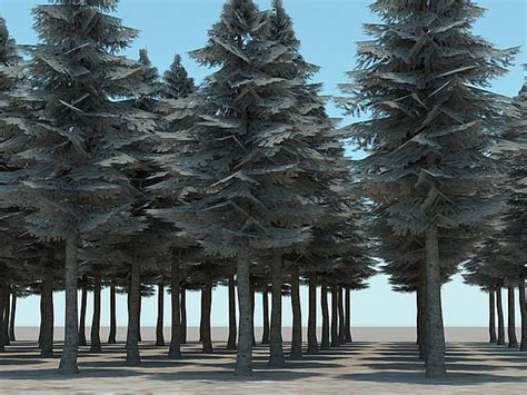tall evergreen trees cgtrader