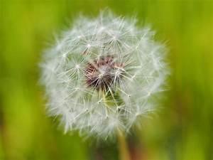 Allergies acting up? Tree pollen count in Greater ...