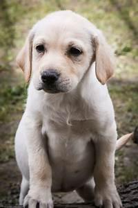 Schneckenkorn Giftig Für Hunde : giftig f r den hund tierquartier wien ~ Lizthompson.info Haus und Dekorationen