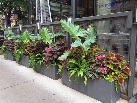 summer garden ideas summer annuals planter container railing urban garden landscape design ideas for