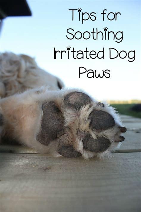 irritated dog paws   stop  httpwwwdogvillscom