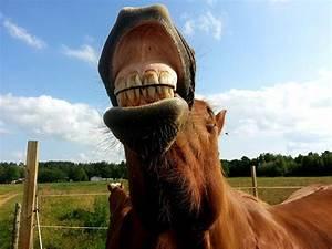 Lightbulbs About Horse Teeth