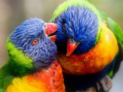 Colorful Birds Parrots Hd Wallpaper : Wallpapers13.com