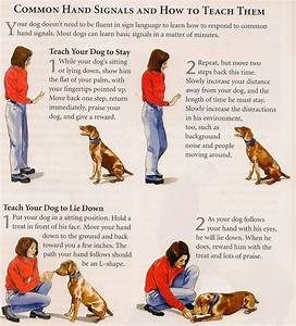 musely With dog training techniques