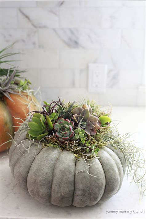succulent  air plant pumpkin centerpiece