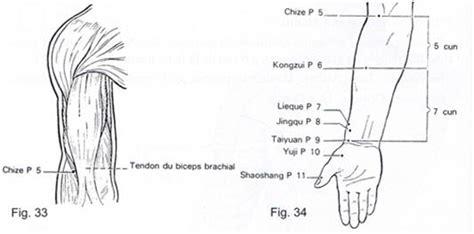 meridien du poumon acupuncture le meridien du poumon tao et spiritualit 233