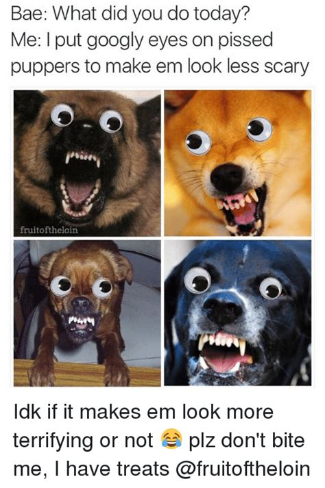 Googly Eyes Meme - bae what did you do today me put googly eyes on pissed puppers to make em look less scary fruit