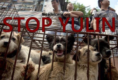 consolato cinese roma stop yulin a presidio animalista sotto il