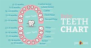 Baby Teeth Chart  What Order Do They Come In