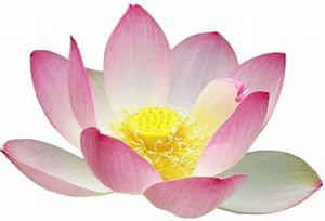 Free to Use & Public Domain Lotus Flower Clip Art