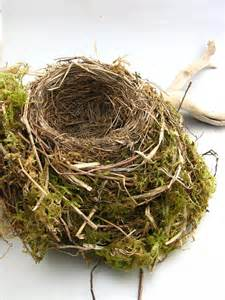 Moss Bird Nest