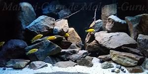 Süßwasserfische Fürs Aquarium : malawi malawisee aquarium mbunas ~ Lizthompson.info Haus und Dekorationen