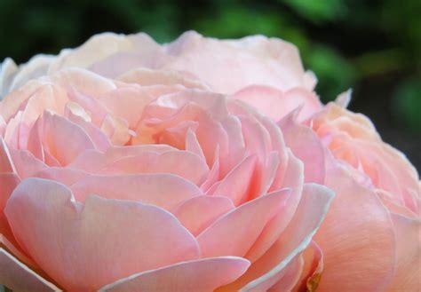 spiritual flowers retreats