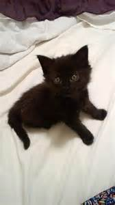 rescue organization saves black cats from prejudice