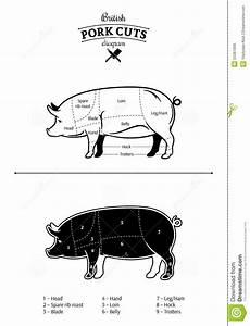 British Pork Cuts Diagram Stock Vector  Illustration Of