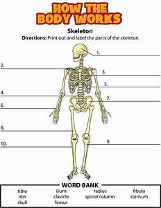 Activity: Bones
