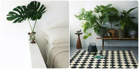 plante succulente d interieur plante d 39 interieur plante succulente d interieur elrup