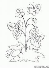 Colorare Fragola Disegni Colorear Fresa Truskawka Kolorowanka Selvatica Kolorowanki Bacche Malvorlagen Coloring Colorkid Dzika Wilde Erdbeeren Sauvage Fraise Salvaje Morango sketch template
